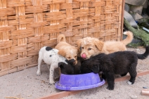 We gave some of our water to the cute puppies